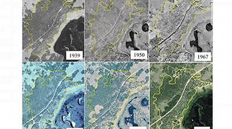 A seventy-two year aerial photo chronosequence showing forest cover change within the Pando aspen clone, Utah, USA. Photos were georectified using ArcMap® software to ensure accurate scale and location alignment. Yellow polygon depicts the boundary of the 43 ha clone as projected over each photo year. Credit Base images courtesy of USDA Aerial Photography Field Office, Salt Lake City, Utah.