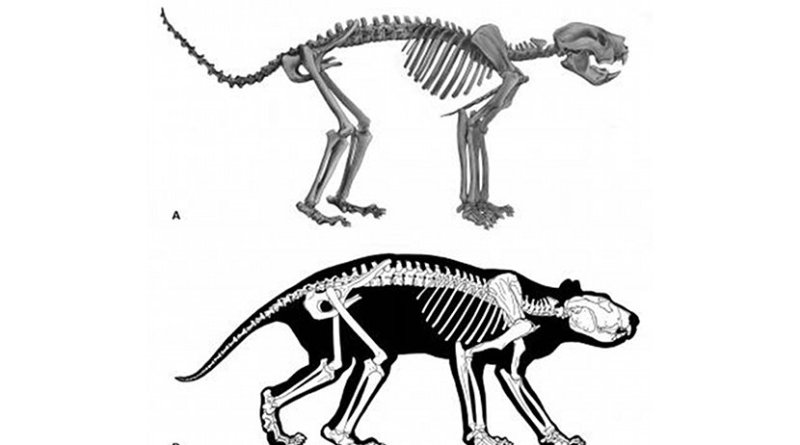(A) Reconstruction of the skeleton of T. carnifex. (B) Body outline based on examination of musculature evident in x-ray imaging of marsupials Vogelnest and Allen. Credit Wells et al., 2018