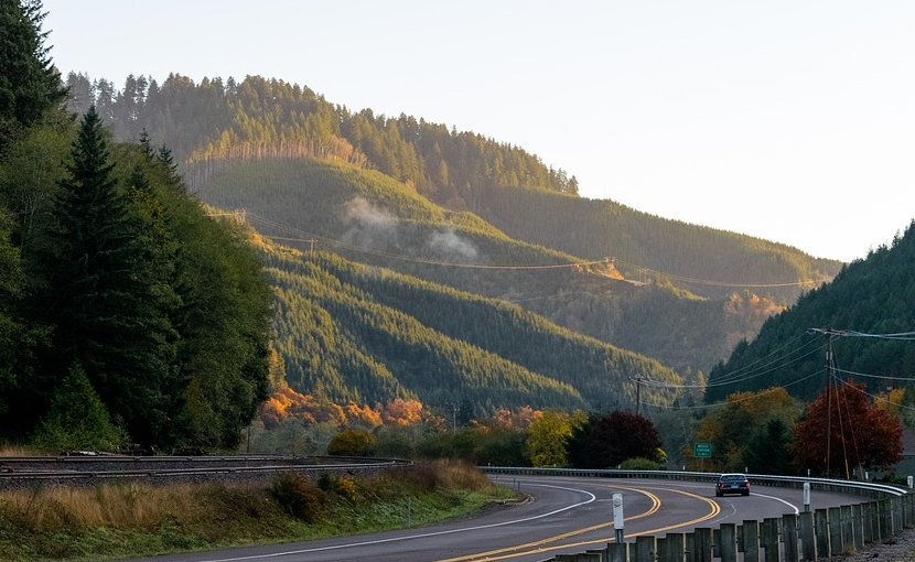Oregon Coastal Range forest