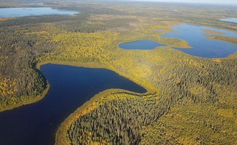 Lakes in the Yukon Flats region of northeast Alaska, seen with fall color. Credit David Butman/University of Washington