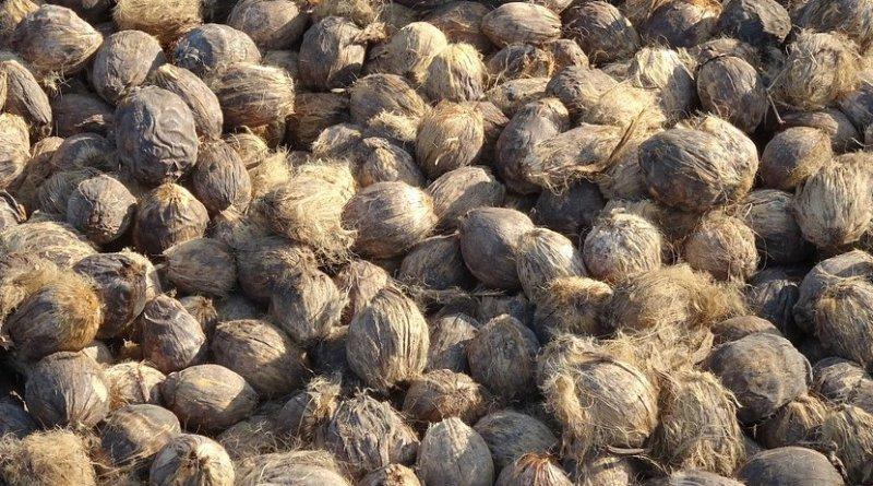 Betal, or Areca, nuts