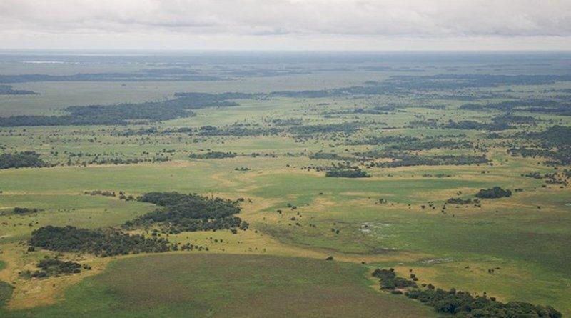 Llanos de Moxos, Amazonia, Bolivia. Photo Credit: Sam Beebe, Wikipedia Commons.