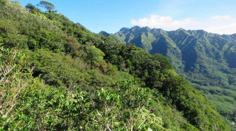 This is one of the seven sites in Hawaii that were part of a study on the interactions of mostly nonnative birds and plants, showing that these novel communities are organized in much the same way as native communities worldwide. Credit Jeferson Vizentin-Bugoni