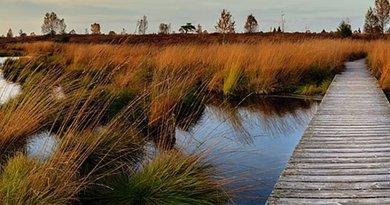 wetland swamp marsh
