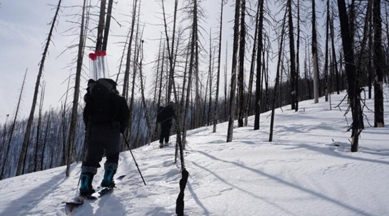 Kelly Gleason, assistant professor of environmental science and management at Portland State University, and crew head out in a recently burned forest to collect snow samples. Credit Christina Aragon | Portland State University