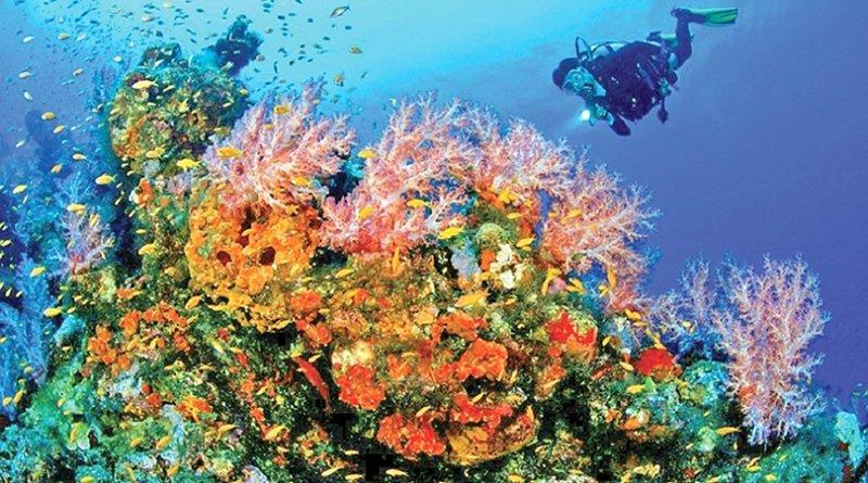 Coral. Photo Credit: Sri Lanka government