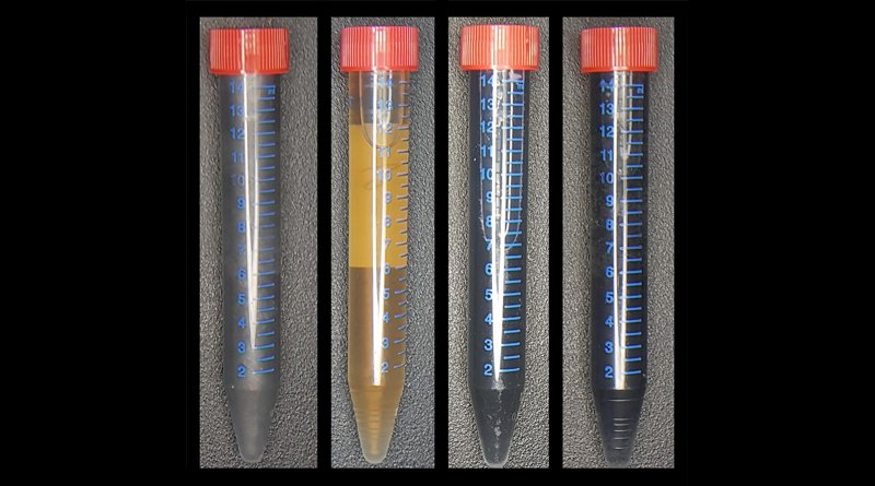 From left to right, A vial of graphite (Gr), like what you would find in an ordinary pencil; a vial of graphene oxide (GO), produced by exfoliating Gr--shedding the layers of the material -- and mixing it with the bacteria Shewanella; a vial of the resulting product -- graphene materials (mrGO); and a vial of graphene materials that have been produced chemically (crGO). The graphene materials produced by Anne Meyer's lab are significantly thinner than the graphene materials produced chemically. Credit Delft University of Technology photo / Benjamin Lehner