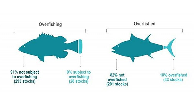Of 321 stocks with known status, 293 (91%) are not subject to overfishing. Of 244 stocks with known status, 201 (or 82%) are not overfished, leaving 43 stocks (18%) listed as overfished. (NOAA) Credit NOAA