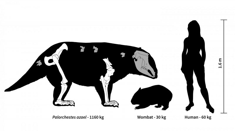 Ancient Australia was home to strange marsupial giants, some weighing over 1,000 kg. Credit Hazel Richards (2019)