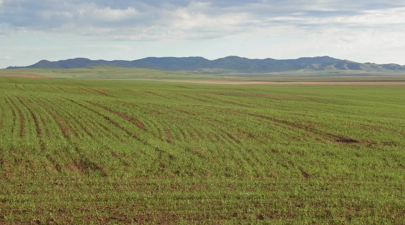 Agricultural fields in northern Mongolia, Khovsgol Aimag. Credit A. R. Ventresca Miller
