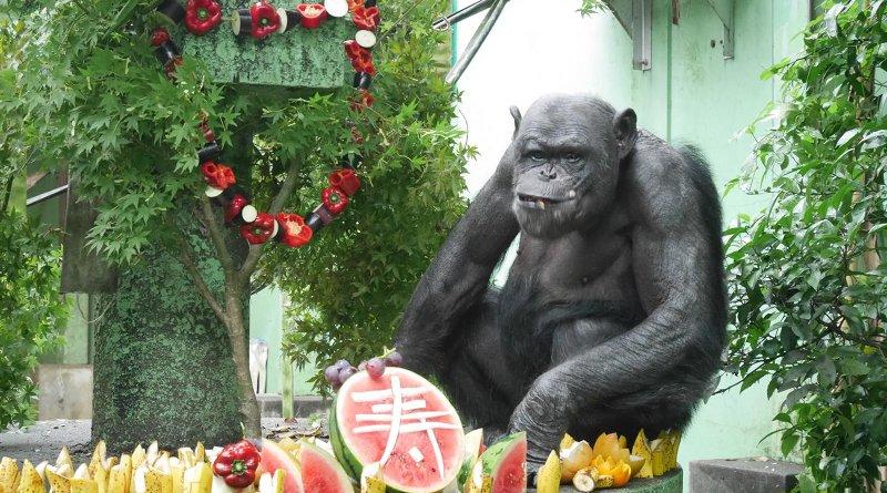 Lennon, a 49-year-old male at Kyoto University's Kumamoto Sanctuary celebrating Japan's respect for the aged day. Credit Kyoto University