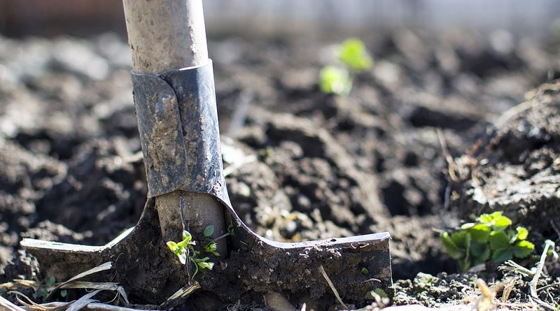 organic farming shovel soil
