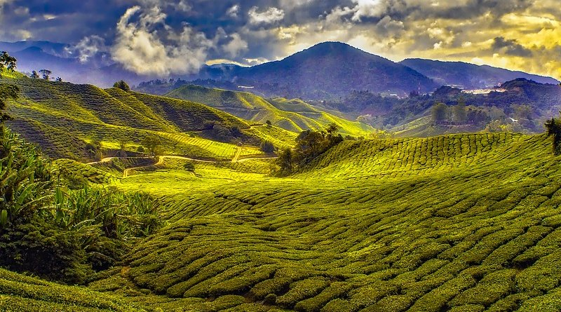 malaysia agriculture farm landscape
