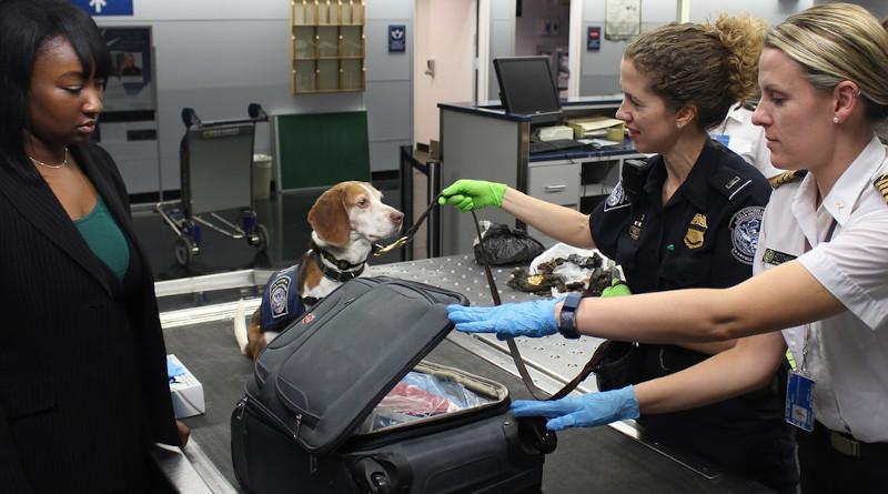 airport security tsa transportation control