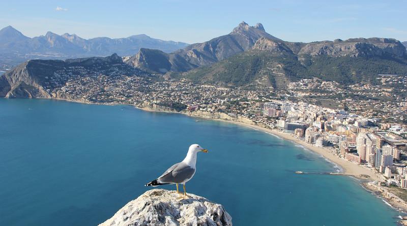 Seagull Ave Bird Calpe Alicante Spain