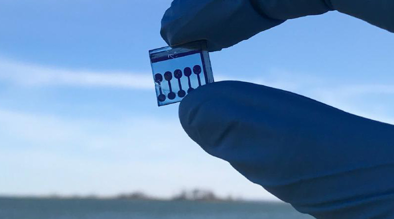 This image shows an organic solar cell, which are likely candidates for underwater applications as they can be made water resistant and perform excellently in low-light conditions. CREDIT Allison Kalpakci