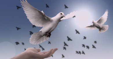 Dove Hand Trust God Pray Prayer Peace Soul