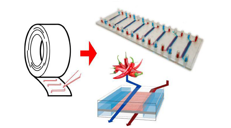 A simplified schematic of the gut-on-a-chip system made with double-sided tape.