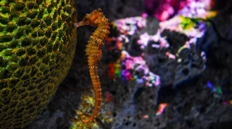Sea Horse Underwater Plants Animals Fish Colour
