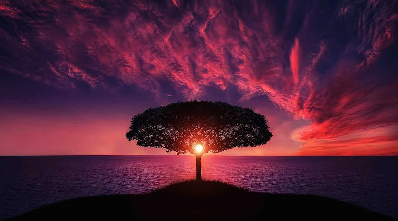 Nature Tree Sunset Amazing Beautiful Breathtaking