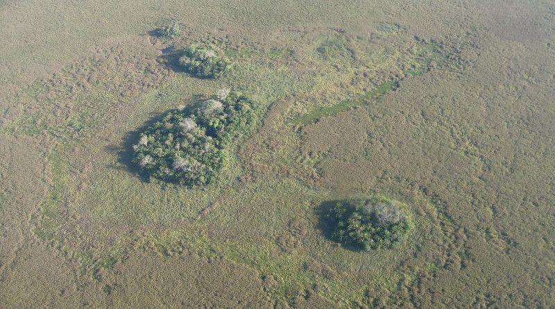 Forest islands seen from above (photo Umberto Lombardo). CREDIT Umberto Lombardo