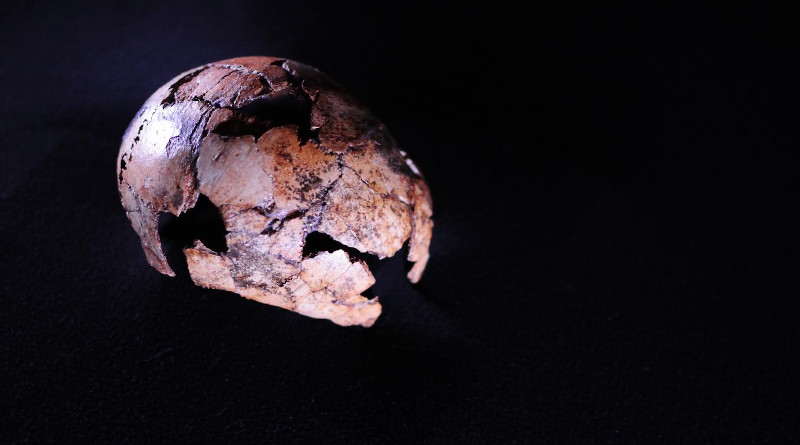 A Homo erectus skullcap found northwest of Johannesburg in South Africa has been identified as the oldest to date, in research published in Science. The hominin is a direct ancestor of modern humans, experienced a changing climate, and moved out of Africa into other continents. The discovery of DNH 134 pushes the possible origin of Homo erectus back between 150,000 and 200,000 years. CREDIT Therese van Wyk, University of Johannesburg.