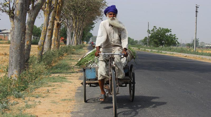 Man Old Tree Road Highway Greenery Green Punjab