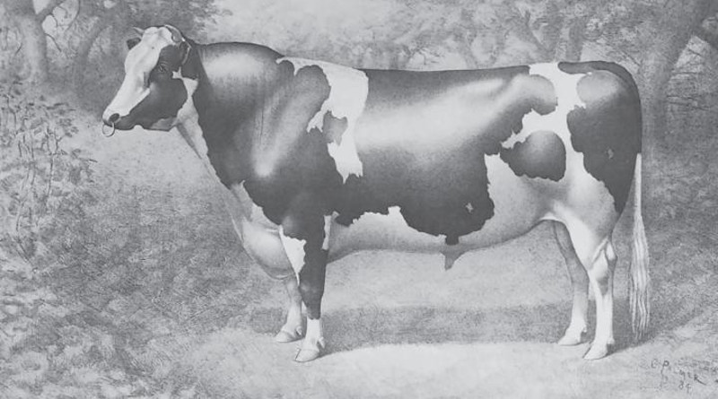 Picture of Netherland Prince from the Holstein Herd-Book, Vol. 8, 1885. CREDIT: Holstein Breeders Association of America, 1885