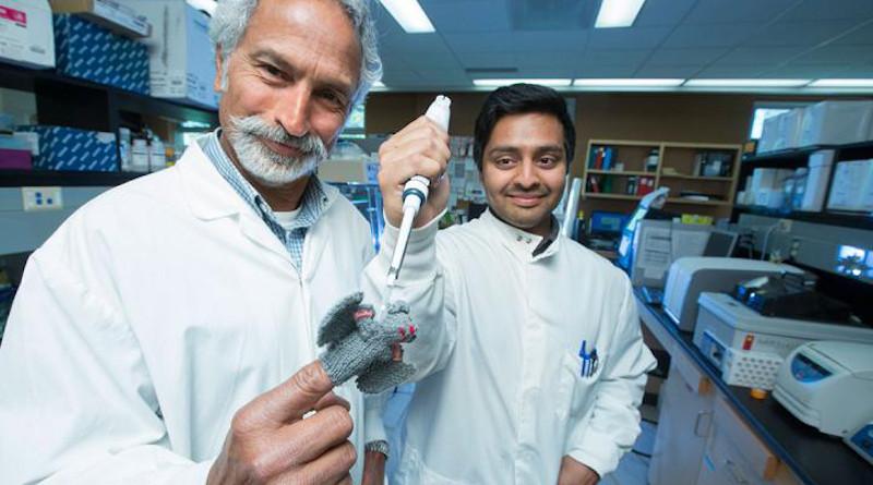USask researcher Vikram Misra (left) and former PhD student Arinjay Banerjee posing with a bat finger puppet. CREDIT Dave Stobbe for the University of Saskatchewan.