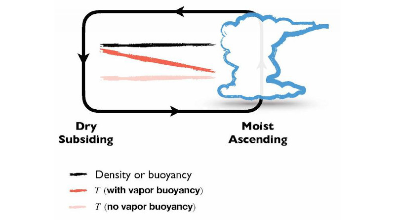 This graphic illustrates the vapor buoyancy effect, in which cold, humid air rises because it is lighter than dry air. CREDIT Da Yang/UC Davis