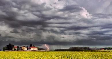 Storm Rain Weather Agriculture Farm Flowers