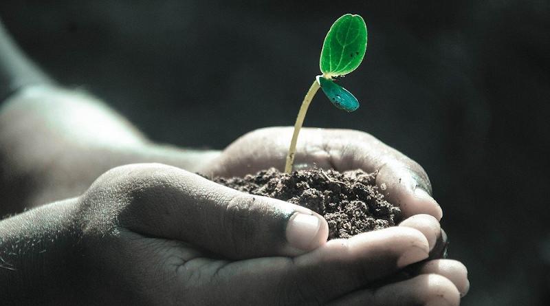 Hands Macro Plant Soil Grow Life Gray Life