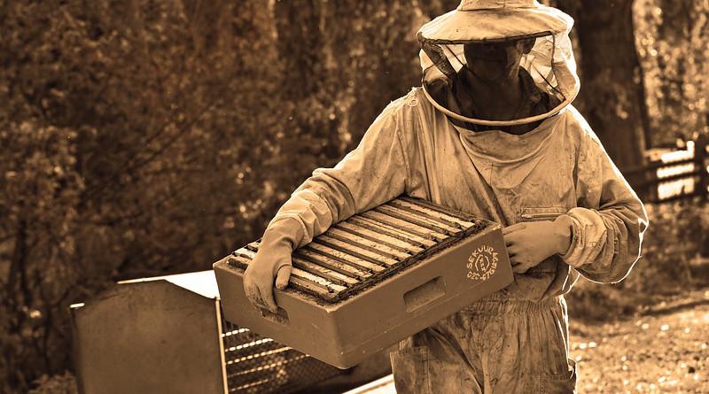 Man Beekeeper Beekeeping Apiarist Beehive