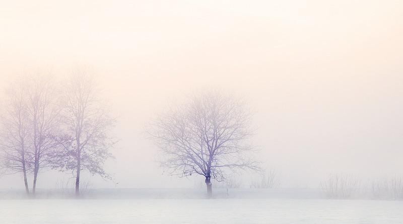 Winter Landscape Trees Snow Nature Snowy Tree