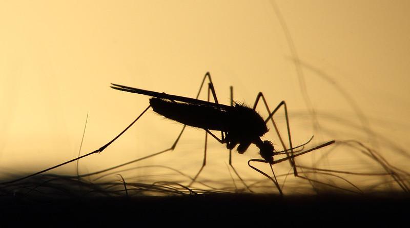 Mosquito Feeding Silhouette Skeeter Parasite
