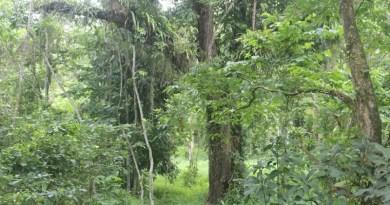 assam jungle