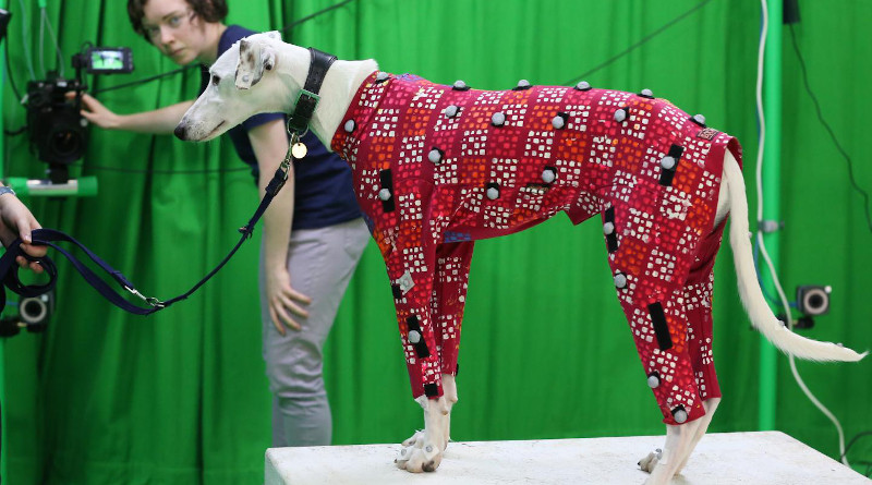 Sinead Kearney adjusts the cameras to collect the motion capture data of a lurcher CREDIT: University of Bath