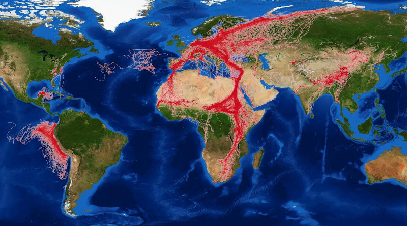 Movebank data worldmap. CREDIT: MPIAB/ MaxCine
