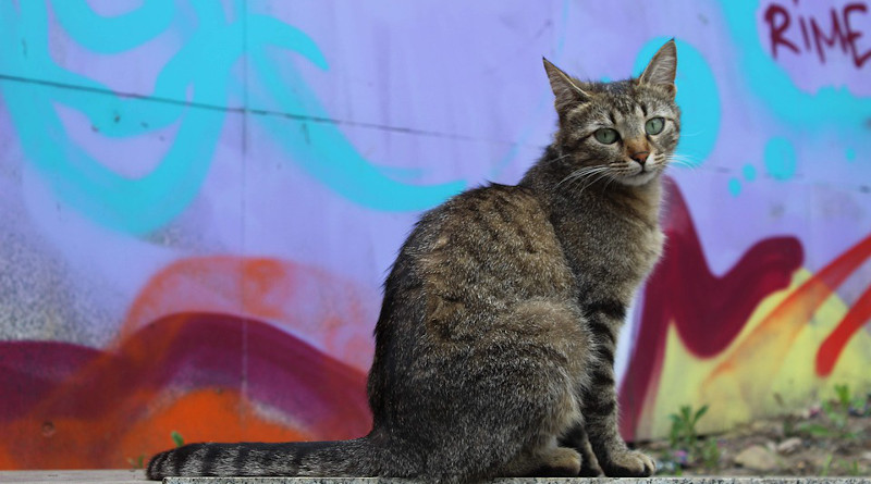 Cat Graffiti Europe Bulgaria Sofia Street Animal