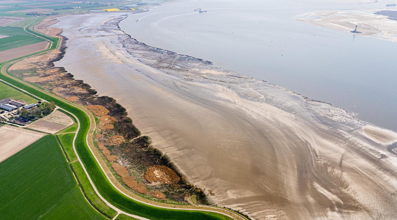 These are salt marshes in the Westerschelde (near Rilland). CREDIT: Edwin Paree