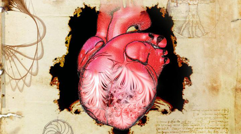 The heart and its trabeculae, first described by Leonardo da Vinci. CREDIT: Spencer Phillips
