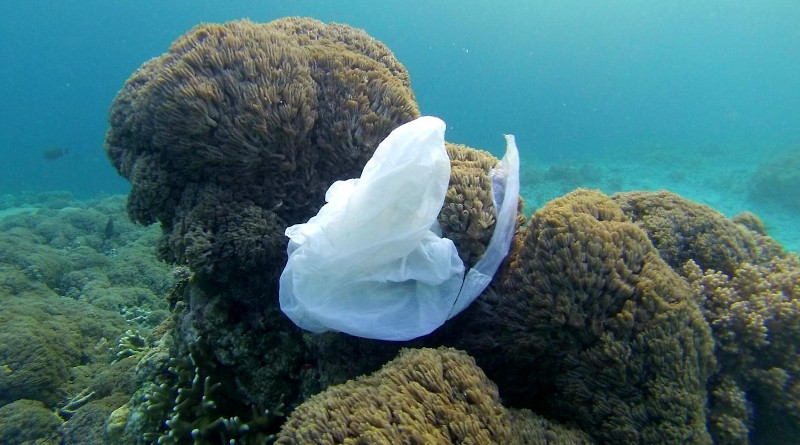 Plastic bag in the ocean CREDIT: Making Oceans Plastic Free