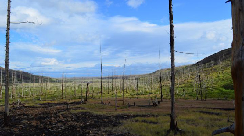 Widescale pollution has caused devastating forest decline east of Norilsk, Russia. CREDIT: Dr Alexander Kirdyanov