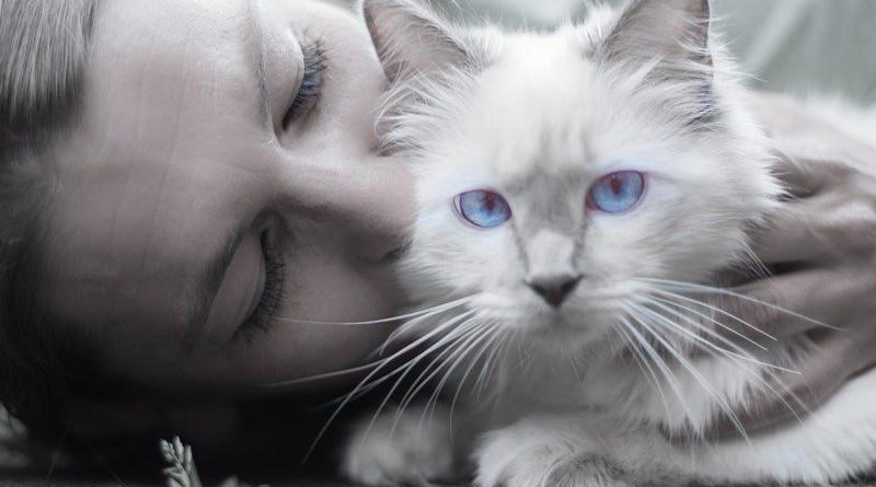 Cat Woman Blue Eyes Portrait Whiskers Pet Person