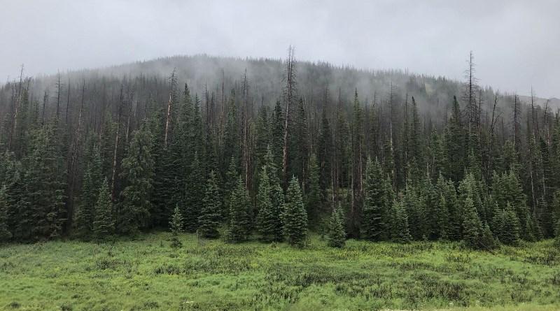 A high-elevation spruce beetle-affected forest. CREDIT: Seth Davis/Colorado State University