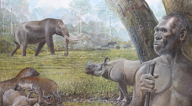 Artist's reconstruction of a savannah in Middle Pleistocene Southeast Asia. In the foreground Homo erectus, stegodon, hyenas, and Asian rhinos are depicted. Water buffalo can be seen at the edge of a riparian forest in the background CREDIT: Peter Schouten
