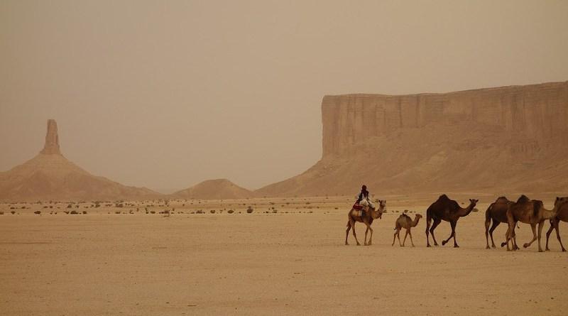 Camel Train Saudi Arabia Ramadan Ramadhan