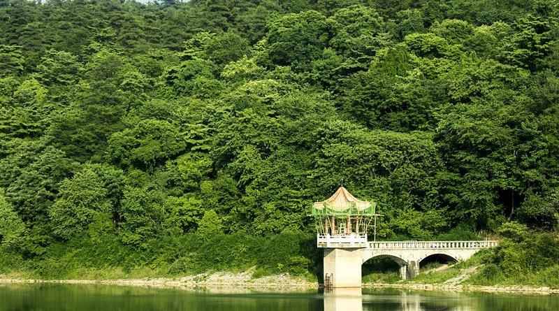 Forest China Guizhou Guiyang