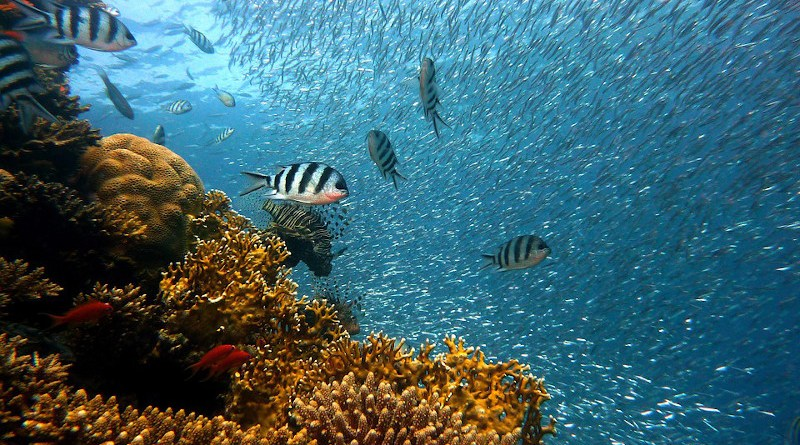 Fish Underwater Corals Sea Ocean Coral Reef