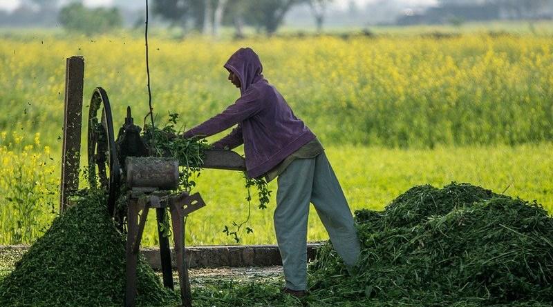 Pakistan agriculture farmer Cutter Labor Machine Work Tool Farm Farm Life